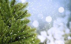 Зимняя ель.jpg