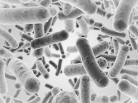 Фото бактерий.jpg