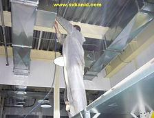 Сотрудники компании СпецВодоКанал проводят работы по профилактической очистке вентиляции. Метод очистки вентиляции: механическая очистка.