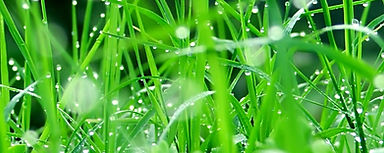 nature_vista-plantss--04_23-1920x1440_ed