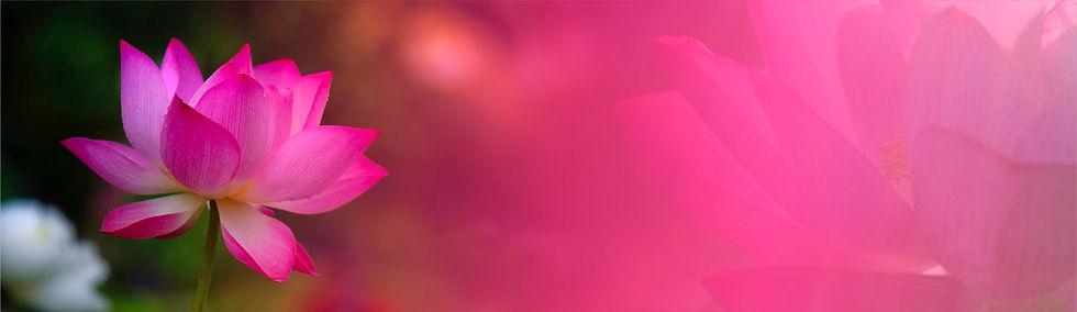 LotusBanner29.jpg