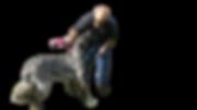 """הסעה לכלב/הסעה לכלבים/הסעות כלבים/הסעות לכלבים/הסעת בעלי חיים/הסעות לבעלי חיים/הסעות בעלי חיים מונית שלוקחת כלבים/מונית עם כלב/מונית ידידותית לכלבים/רילוקיישן עם כלב/מונית לחתול/הסעה לוטרינר/אמבולנס לחיות  הסעת כלב לנתב""""ג/מונית שלוקחת חתולים/מונית הכלב/הסעה לחיות מחמד / מונית-הכלב"""