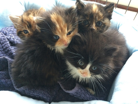 Kittens found huddled together in box