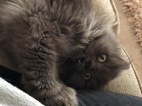 Bowie is missing from Stairfoot