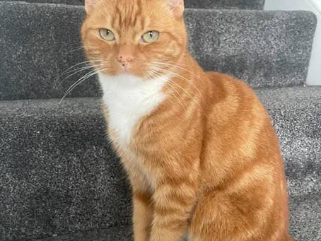 House Cat Missing CUDWORTH ***REUNITED***