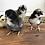 Thumbnail: Olive Eggers