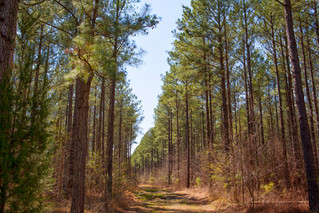 Small timberland sale in North Carolina