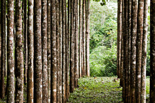 Latin American Forest Management Agreement