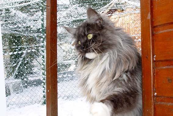 Talismane sous la neige