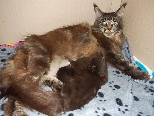 Nutella et ses bébés