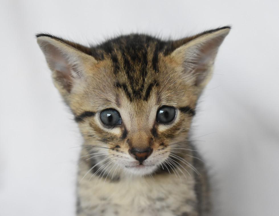 Scat-Cat