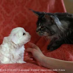 ZIGGY et Léon chiot coton