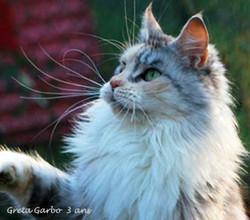 Greta GARBO  2011