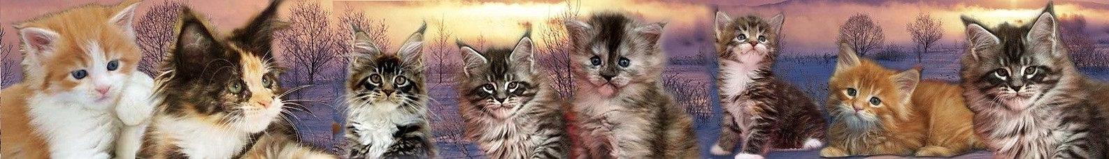 chatons maine coon Cartoonland