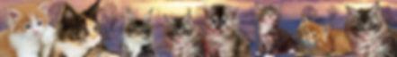 MCchatons1600.230-1-1600x230.jpg