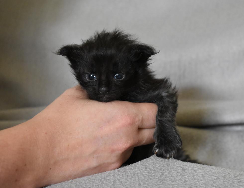 Sirius Black a 1 mois