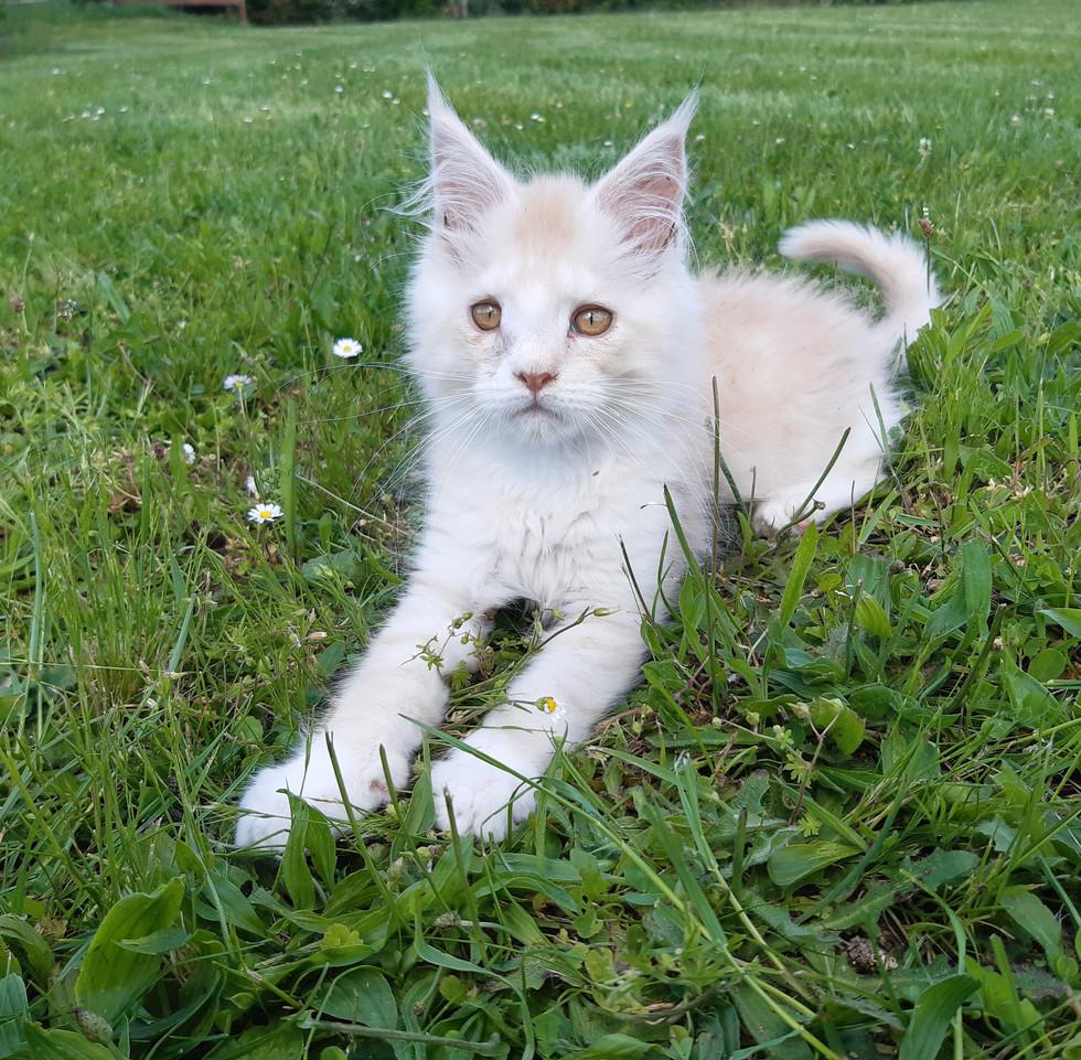 Simba a 3 mois et demi, il profite du soleil. Un amour de chaton !