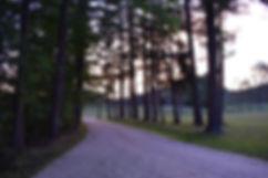 Trees facing office.JPG