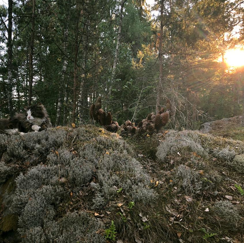 14.༾ ༿,pinecones,  27 x 60 x 30 cm   jpg