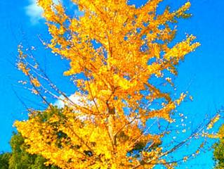 いっそう深まる秋。