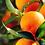 Thumbnail: Huile essentielle Orange / Citrus sinensis (15mL)