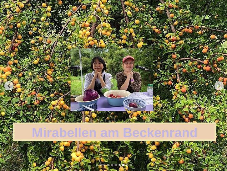 Mirabellen am Beckenrand.png
