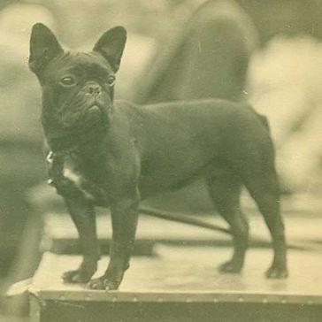 French-Bulldog-History-02.jpg