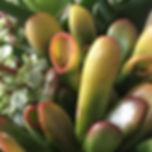 "#313flowersbysophia ""Succulent Jade"" on"