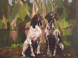 German Pointers