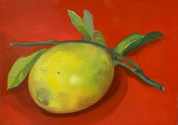 Lemon from my garden