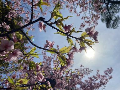 春はすぐそこ🌸 [2021/02/27]