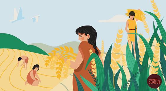 L'agriculture néolithique à la loupe