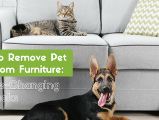 How To Remove Pet Hair From Furniture: 5 Life-Changing Hacks