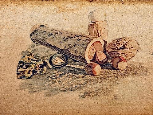 Boîte à graines Bamboo