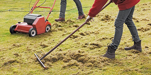 Dethatching the Lawn with an Electric De