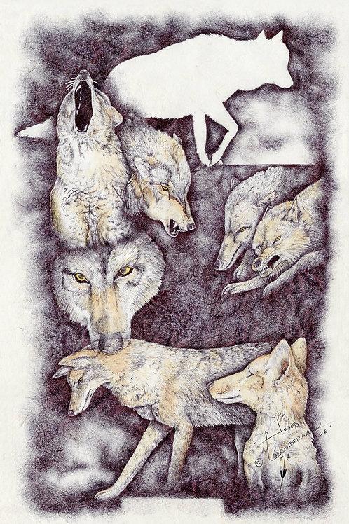 Ways of a Wolf