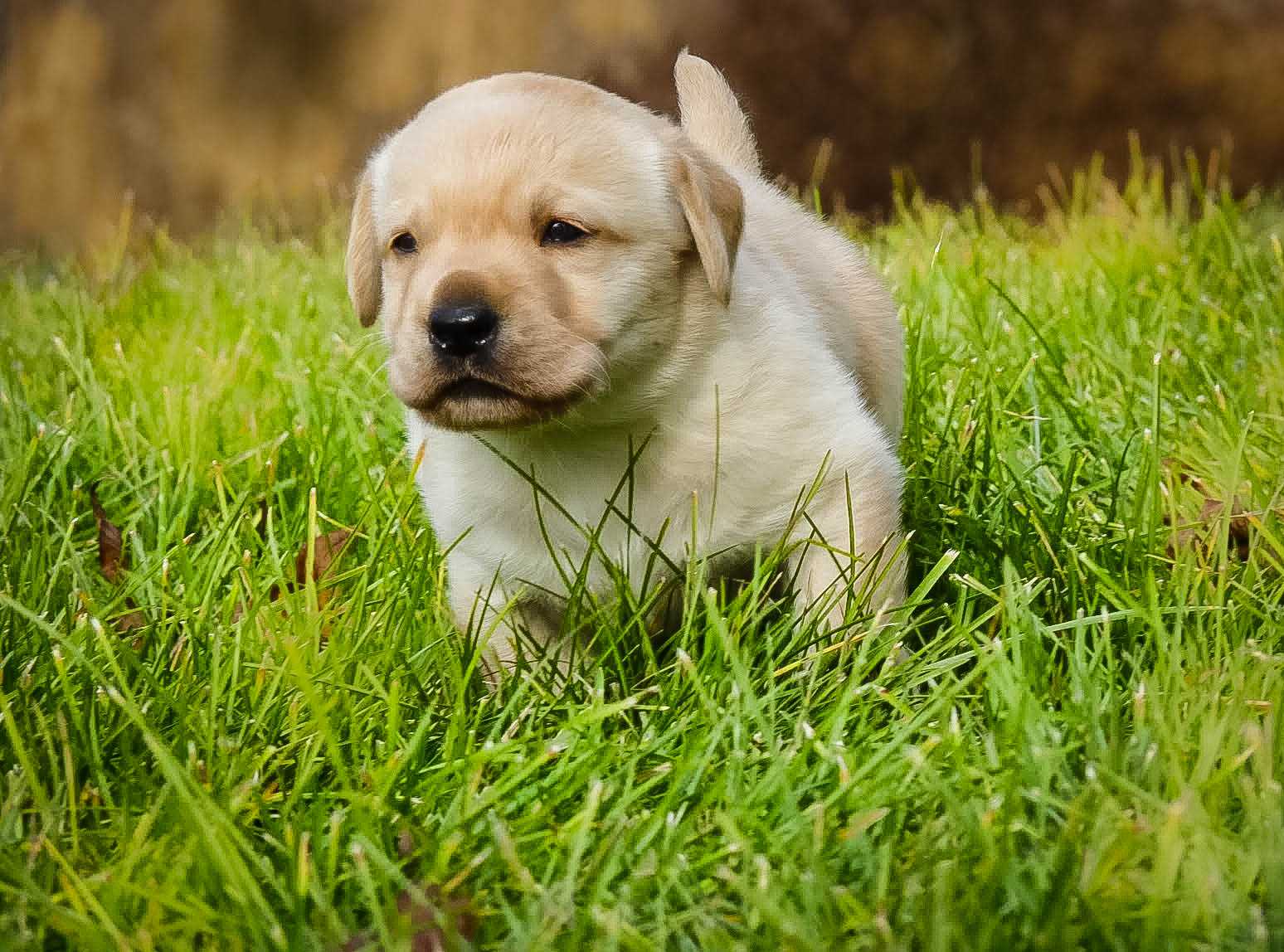 Pup on the move