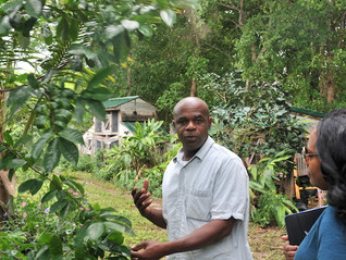 An ambition to sell tea to China in TCI!
