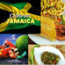 Taste of the Caribbean Lunch Special- Celebrating the Food of Jamaica