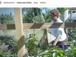 Caicos Tea Featured on CNN Travel