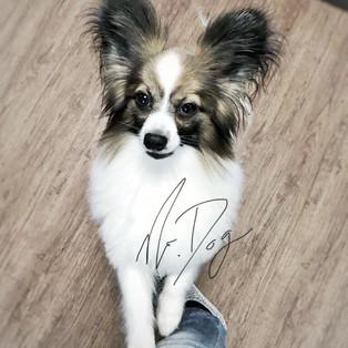 Hundesalon Sarganserland