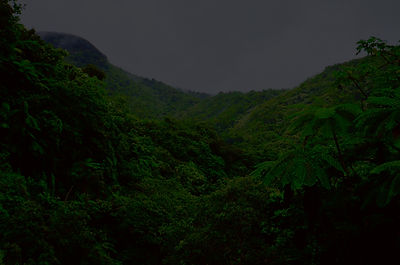 mountain-covered-with-green-trees-784148