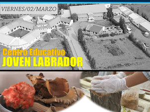 "Taller intensivo sobre ""Producción de Gírgolas en Patagonia Sur"""
