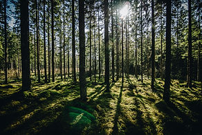 linda-sondergaard-441594-unsplash.jpg