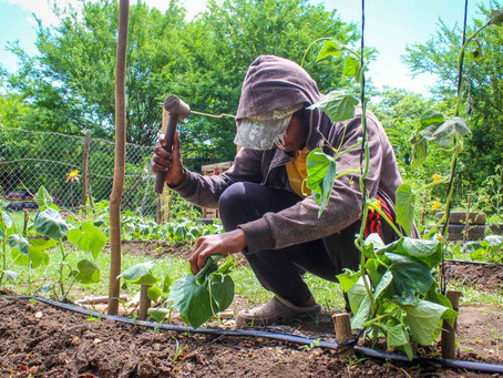 Community Gardening with Convoy of Hope