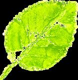 printed-leaf-9.png