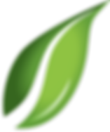 green-leaves-png-0.png