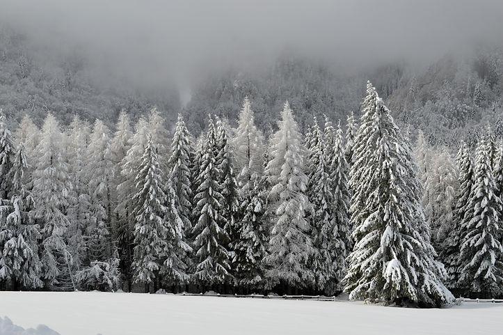 winter-1086583.jpg