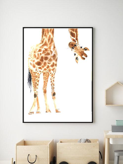 Giraffe - 1 pic