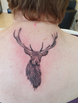 Little stag head